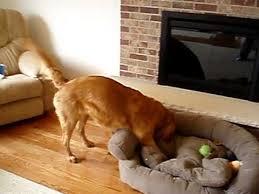 easteregghunt